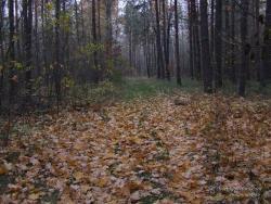 В лесу поздней осенью