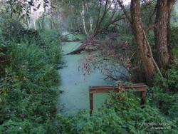 Заболоченный осушительный канал в лесу