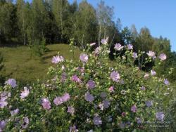 Цветы у кручи