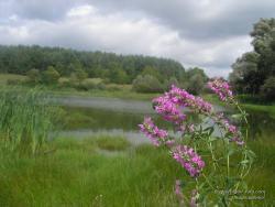 Цветок у озера