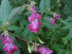 Хрупкий цветочек