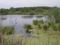 Заболоченное озеро