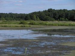 Заболоченное озеро в карьере по добыче торфа