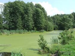 Заболоченное озеро в лесу