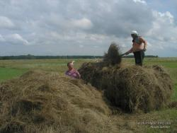 Загрузка сена на прицеп трактора