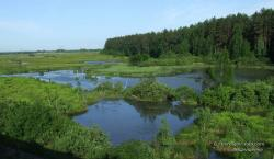 болото на опушке леса